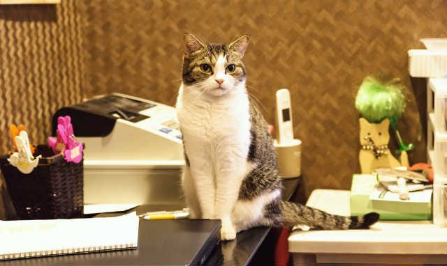 レジの上に猫