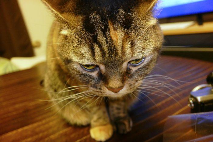 自宅で猫を撮った