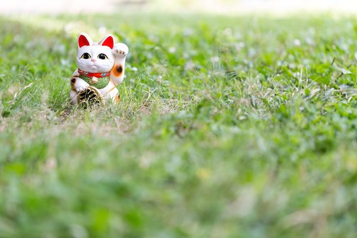 芝生の上の招き猫