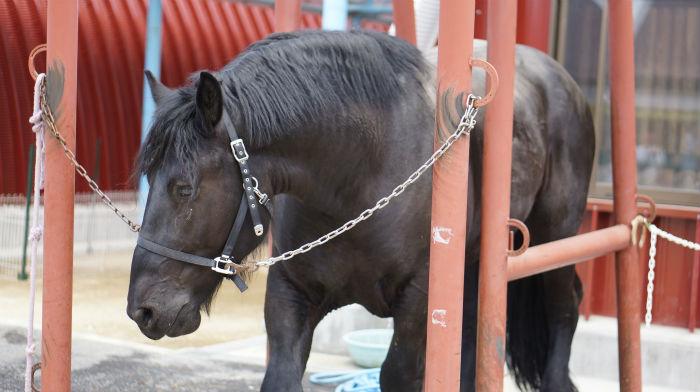 ワールド牧場の馬