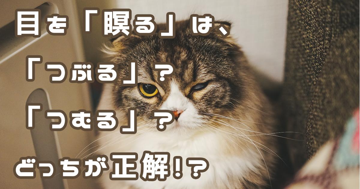 片目で睨む猫